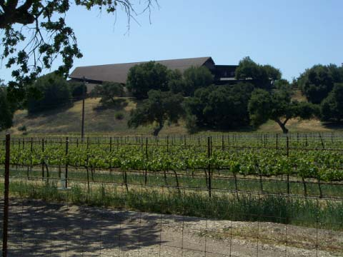 aafirestone-vineyard.jpg