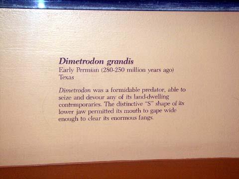 a-dimetrodon-grandis-2.jpg