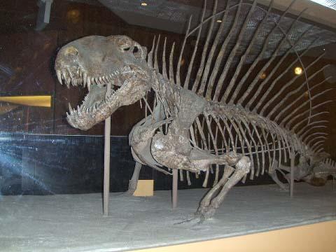 a-dimetrodon-grandis.jpg