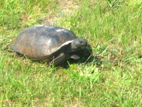 a-turtle.jpg