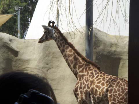 a-giraffe.jpg