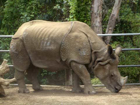 a-rhino.jpg