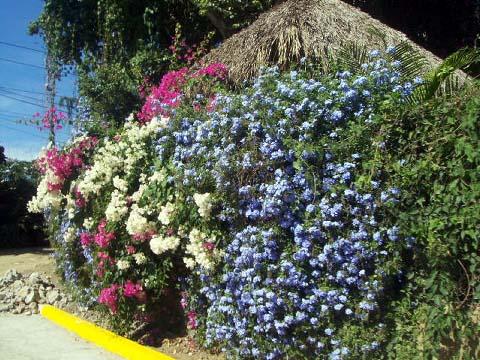 1a-flowers.jpg