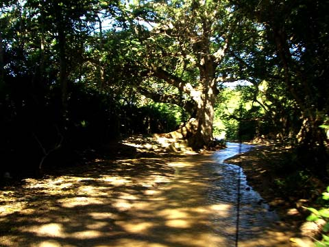 2-river-beach-road.jpg