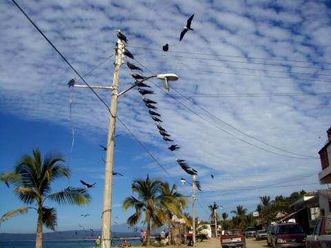a-gulls1.jpg