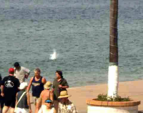a-gulls2.jpg