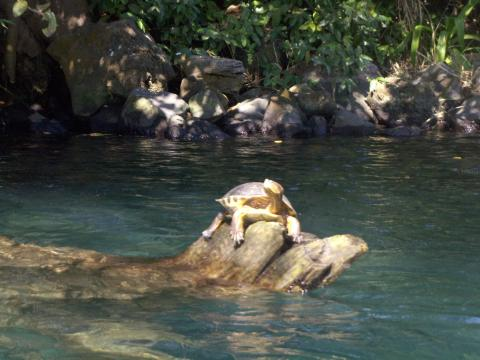 a-turtle1.jpg