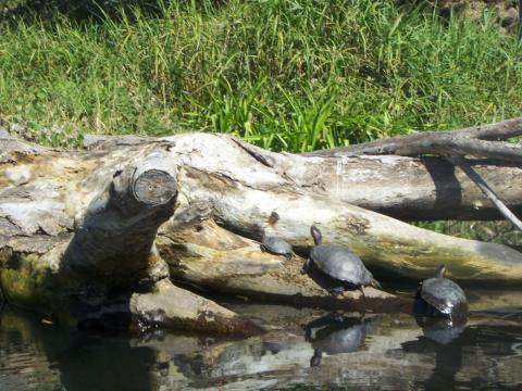 a-turtle2.jpg