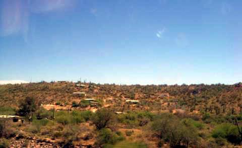 a-phoenix-cactus.jpg