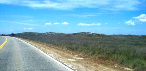 a-grassland.jpg