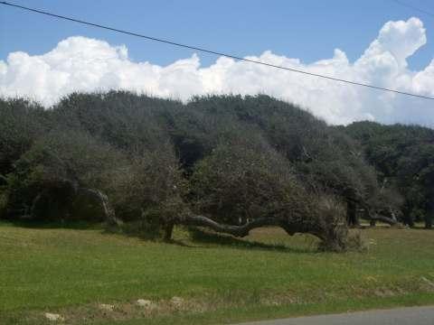 a-tree2.jpg