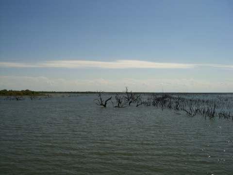 1-lake-trees.jpg