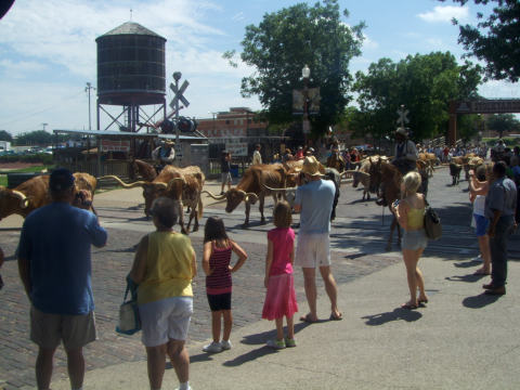 a-cattle1.jpg