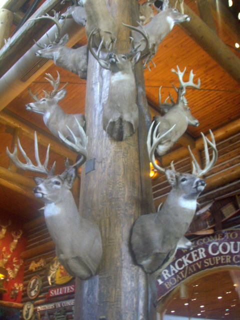 a-deer2.jpg