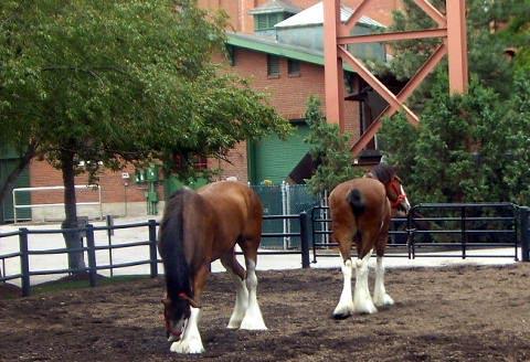 a-horses.jpg