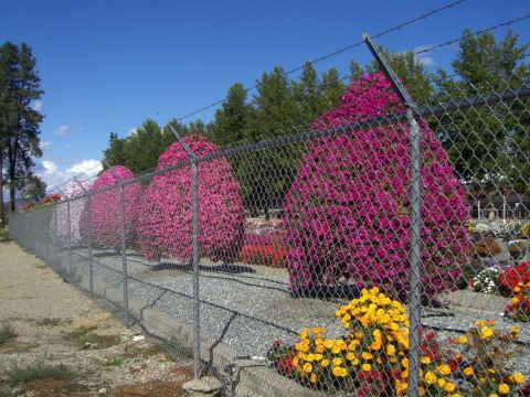z-flowering-trees.jpg