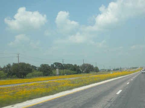 road-flowers.jpg