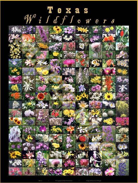 wildflowers-480.jpg