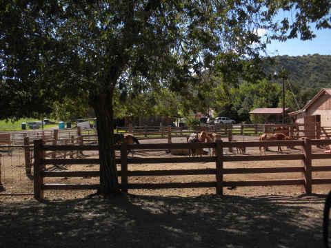 prude-horses.jpg