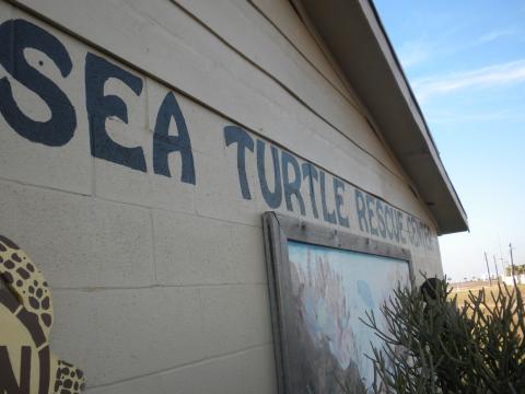 turtle-1.jpg