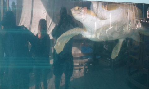 turtle-2.jpg